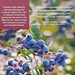 Growing Berries & Fruit Trees in the Pacific Northwest - 215434